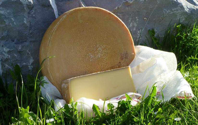 Heumilch – die Spezialmilch für Käse