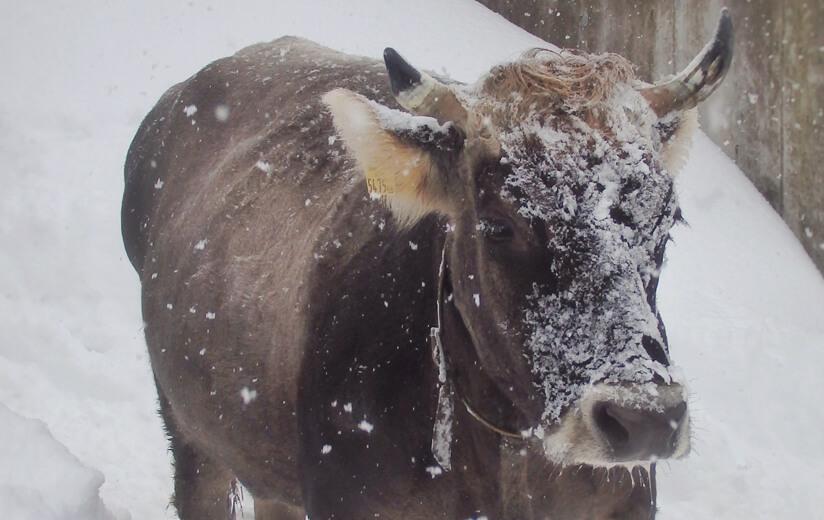 Spass_im_Schnee