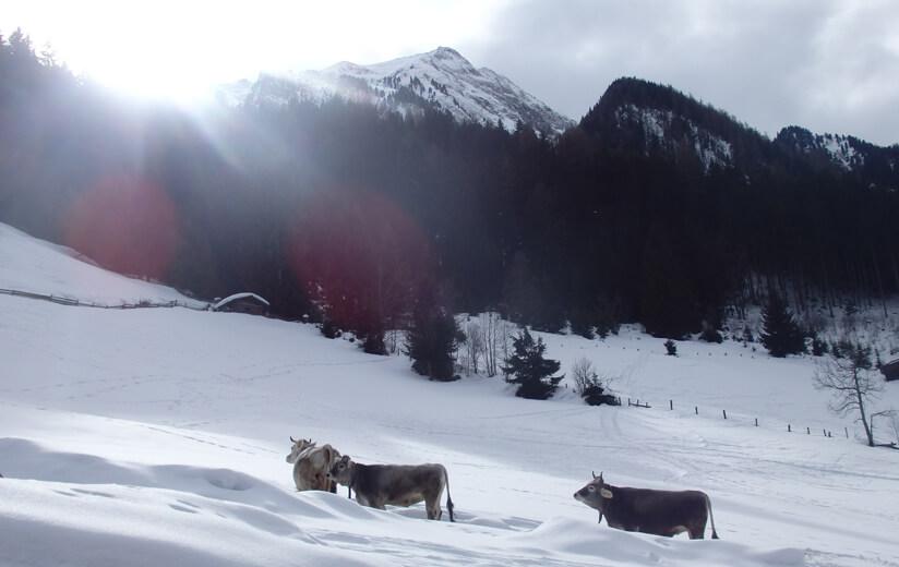 Winterzeit am Kuchlerhof