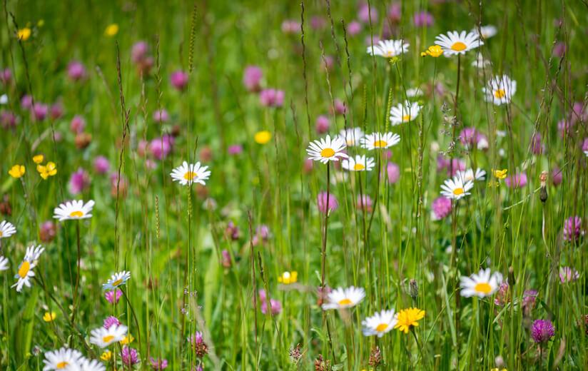 Heuwirtschaft fördert die Artenvielfalt