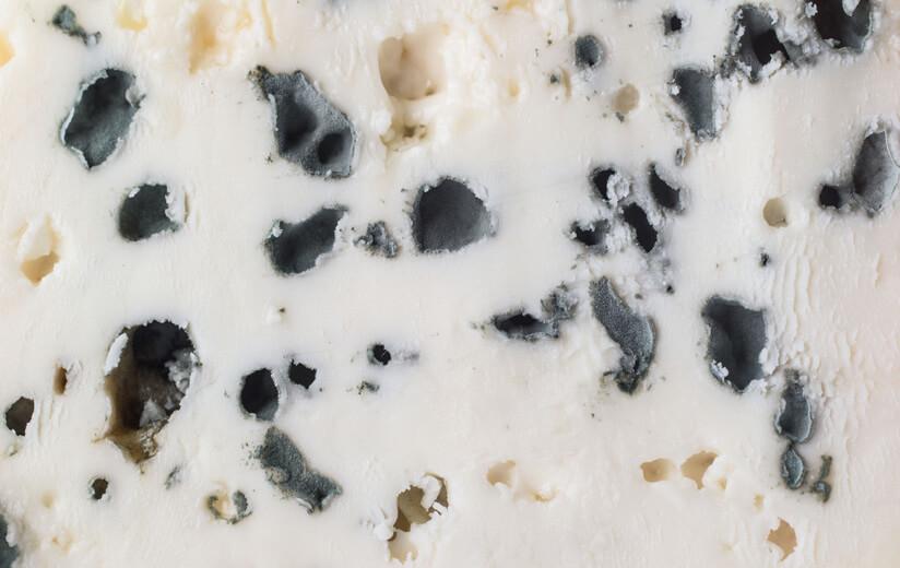 Zwischen gutem und bösem Schimmel:  Heumilch-Käse richtig lagern