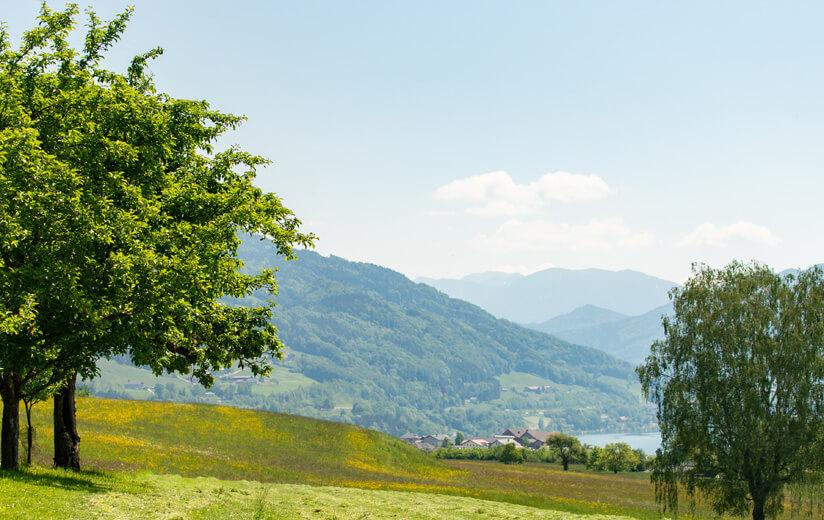 Urgute Heumilch-Rezepte für ein Picknick im Grünen