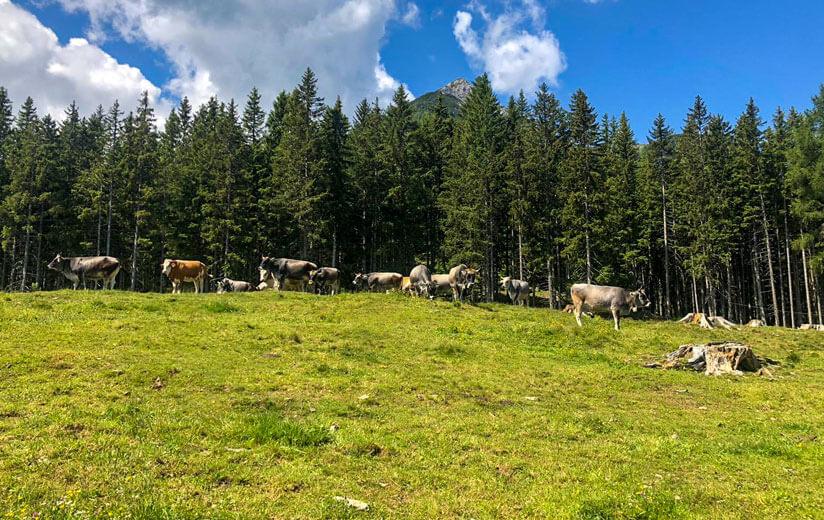Kreith-Alm_Tirol