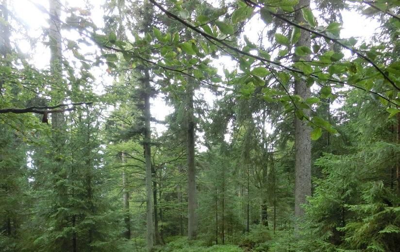 Waldlichtung_Moldaublick