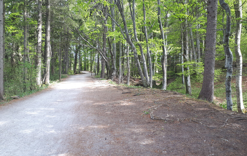 Waldweg_Allgäu