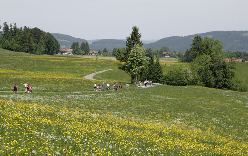 Heumilch-Wanderung #7: Wandern und Entdecken auf dem Pfaffenwinkler Milchweg