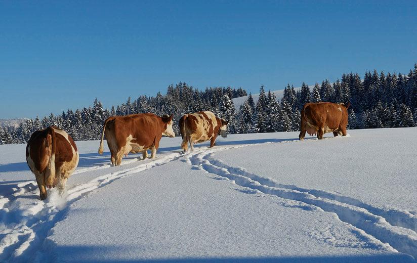 Wanderungen und Touren im Winter: Auszeit im Einklang mit der Natur