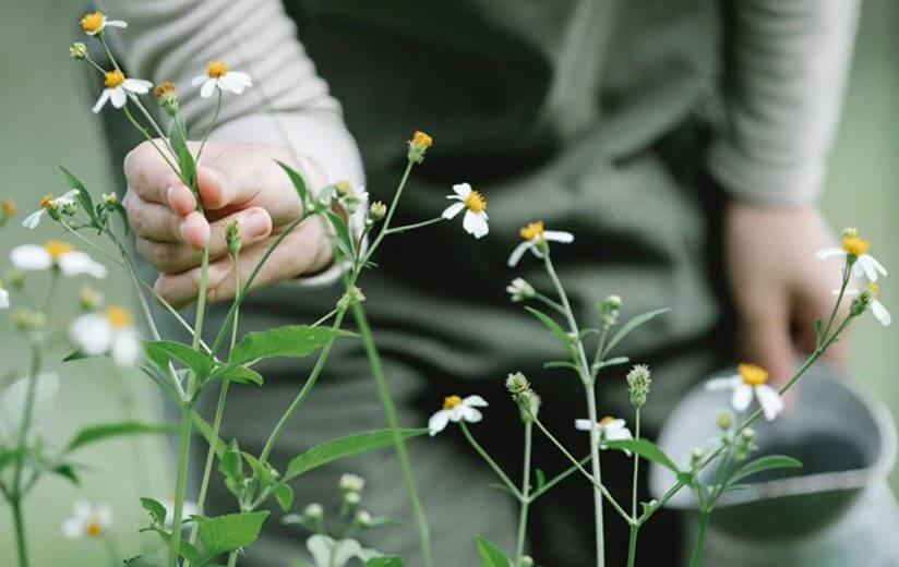 Urgut zur Natur: So schaffst du einen artenfreundlichen Garten oder Balkon
