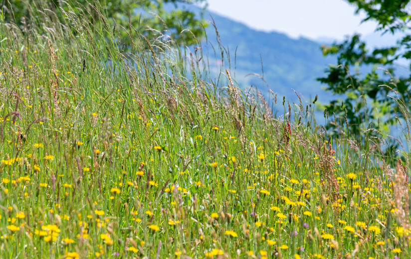 #4: Artenvielfalt auf der Heumilchwiese