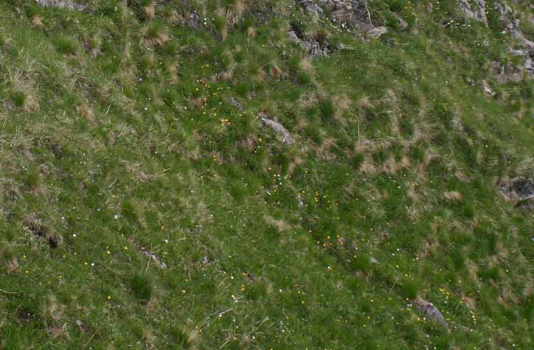 Faltenschwingel-Rasen
