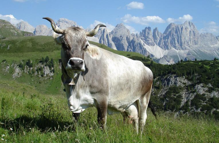 Grigio Alpina
