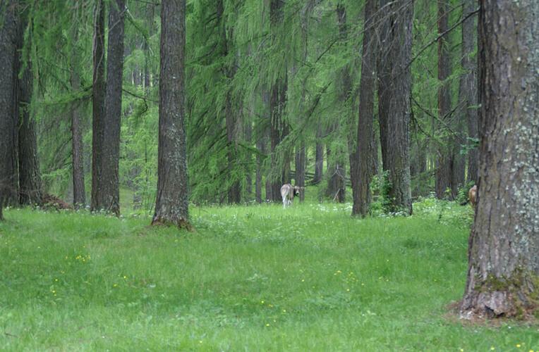 Lärchenwiesen
