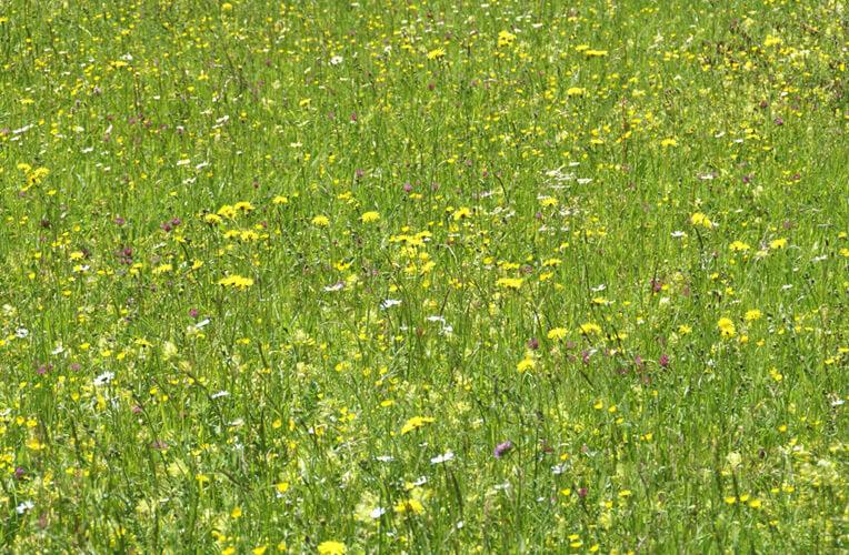 Mittelgebirgs-Goldhaferwiesen