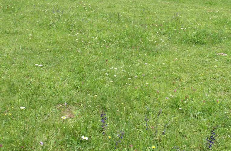 Rot-Schwingel-Straußgras-Weide