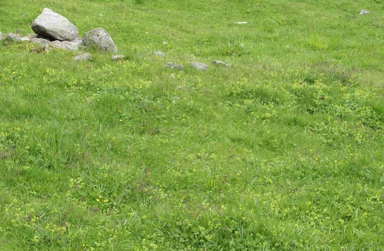 Subalpine Kammgrasweide