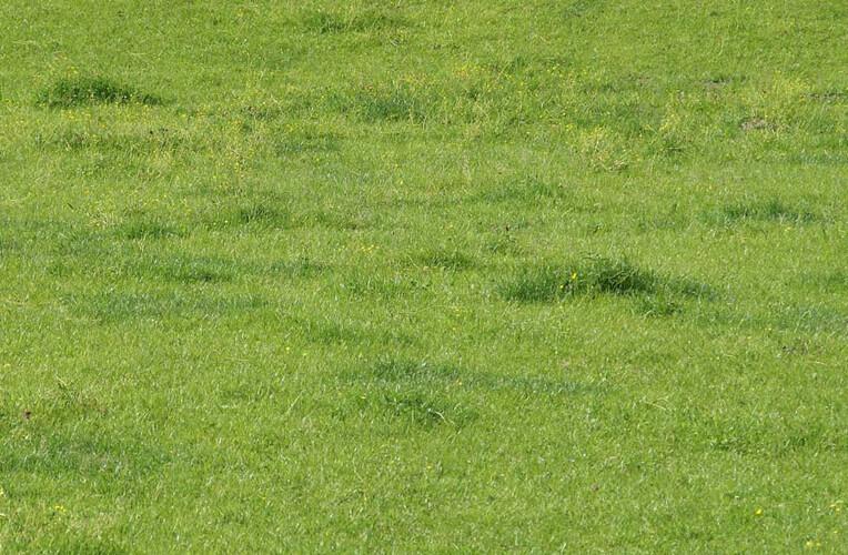 Weidelgras-Weiden