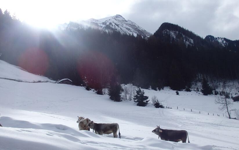 Winter auf der Heumilch-Alm